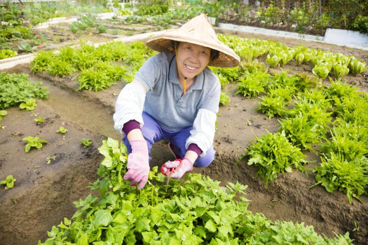 笑顔の農家の人